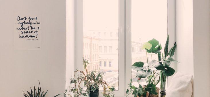Как помочь рассаде и комнатным растениям «цвести и пахнуть»?